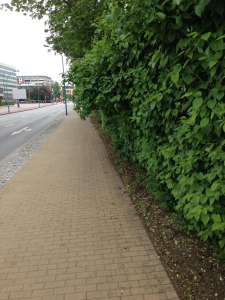 Pflanzen auf dem Radweg